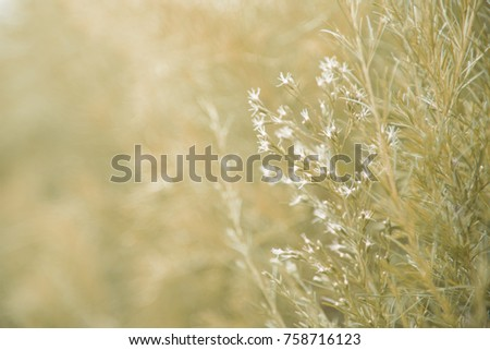 reeds of grass isolated on blurred background, fresh wallpaper concept.