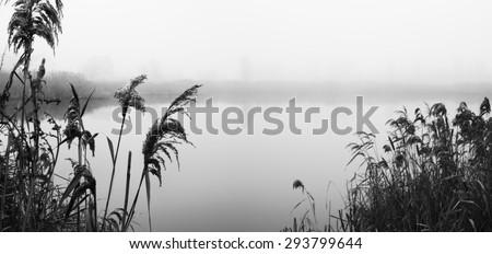 Reeds on river Bank. Misty autumn morning. Sad mood. Black and white photo - stock photo