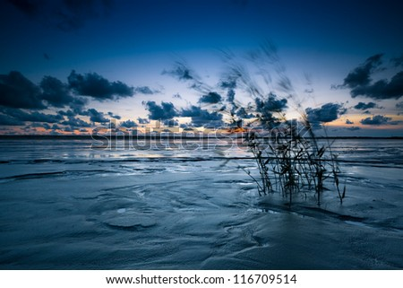 reeds on the shore - stock photo