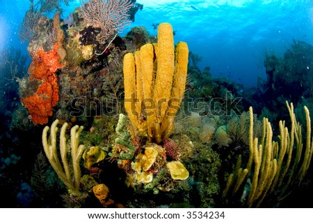 reef - stock photo
