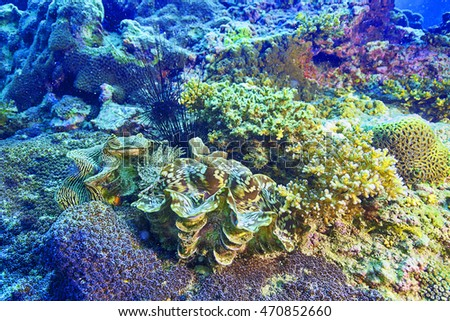 reef coral and reef fish at Chomphon, Thailand
