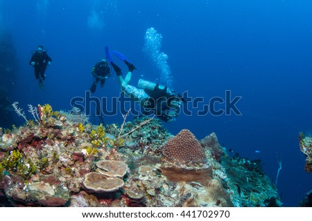 Reef Diving, Grand Cayman
