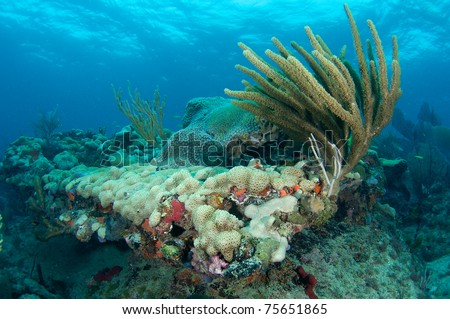 Reef Ledge, picture taken in south east Florida. - stock photo