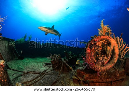 Reef shark cruising over the bow of Ray of hope ship wreck in Nassau, Bahamas - stock photo