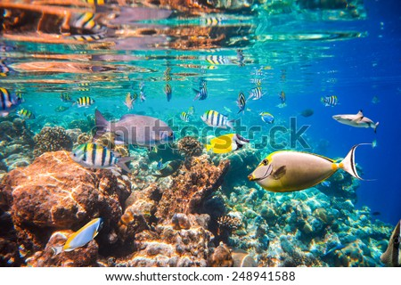 Reef with a variety of hard and soft corals and tropical fish. Maldives Indian Ocean coral reef. - stock photo