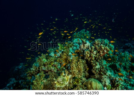 Red fish looking out bright coral stock photo 586945277 for Plenty of fish desktop