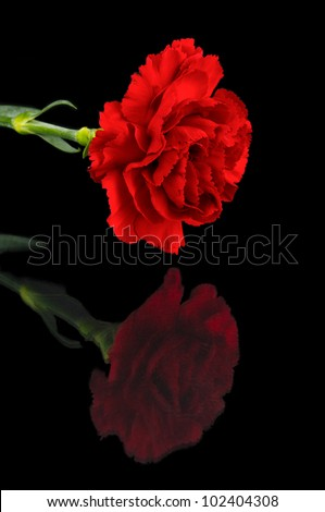 Reflected carnation / Close up of red carnation reflected in black background - stock photo