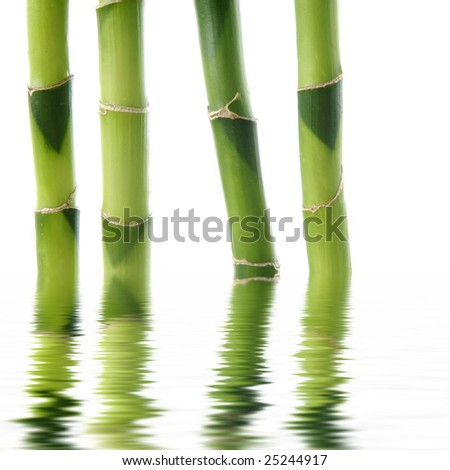 reflection for bamboo stem - stock photo