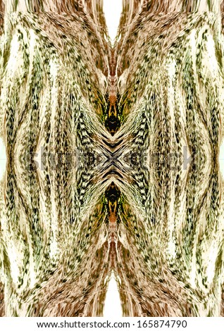 REFLECTION OF BIRD FEATHER - stock photo