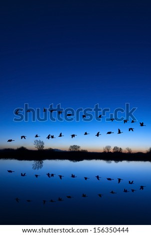 Reflection of Canadian geese flying over wildlife refuge on a blue evening, San Joaquin Valley, California - stock photo