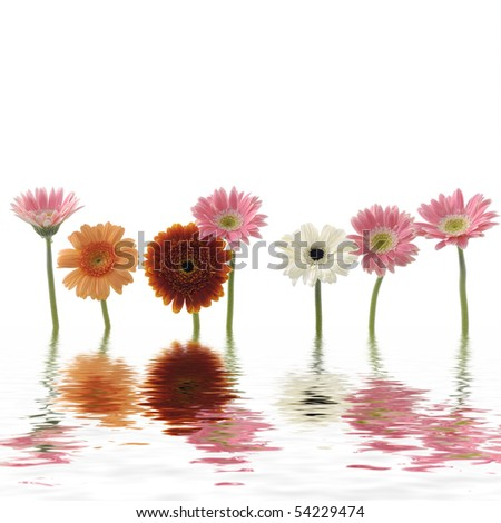 Reflection of colorful sunflower - stock photo