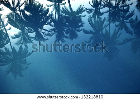 reflection of palms in the water - stock photo