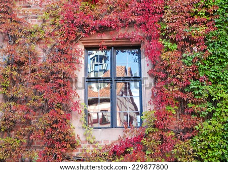 Reflection of the ancient house in the window on the wall , ivy-covered