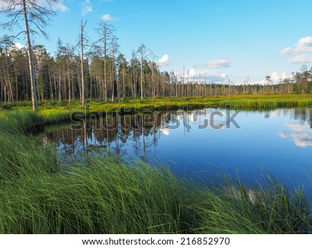 reflection of the forest in the pond - stock photo