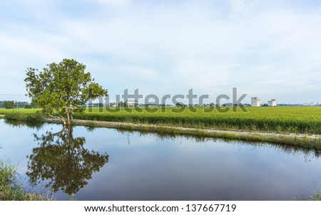 Reflection of tree at paddy field under the blue skies