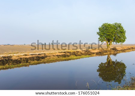 Reflection of tree at paddy field under the blue skies - stock photo