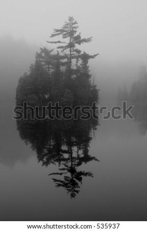 reflection of trees - stock photo