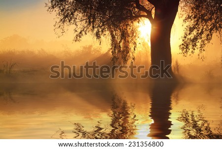 Reflection of trees on the shore at sunrise rays - stock photo