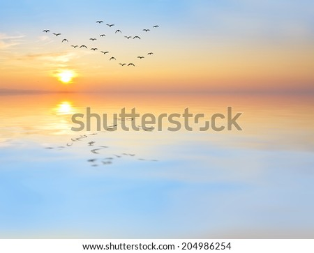 reflections in the lake of soft colors - stock photo