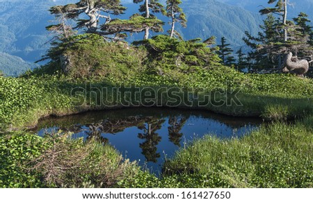 Reflections of pines in water of small pool on top of Mount Verstovia near Sitka, Alaska - stock photo