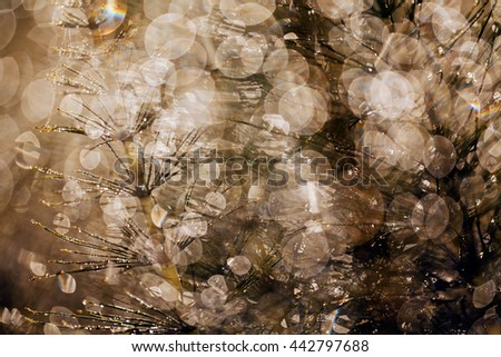 reflections of raindrops on the plant, for blurred background