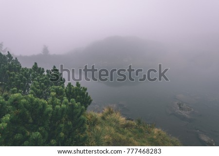 reflections of trees in the lake water at sunrise with morning mist over the water and heavy fog. mountain area water supply - vintage effect film look