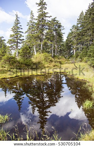 Reflections off the pond in mountains outside Ketchikan town (Alaska).