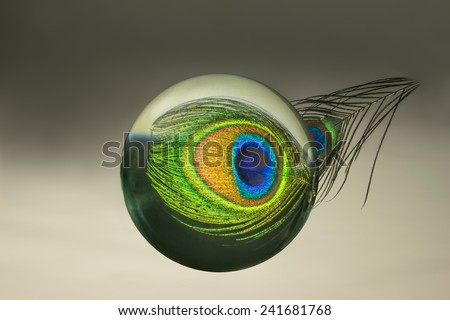 refraction of an illuminated  peacock feather in a glass sphere - stock photo