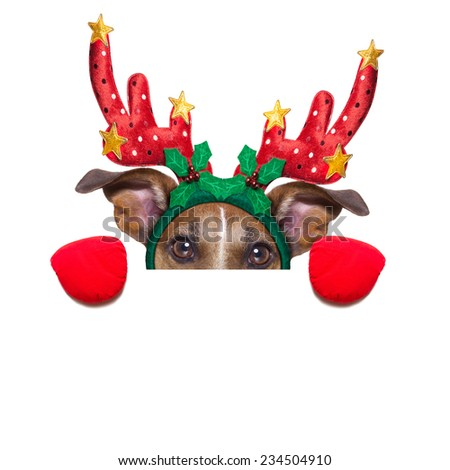 reindeer dog behind a blank banner as a christmas theme, isolated on white background - stock photo
