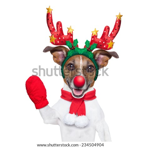 reindeer dog with a red nose  and waving hand isolated on white background - stock photo
