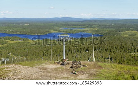 Reindeer on mountains in  Northern Finland