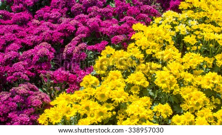 relate of beautiful flowers - stock photo