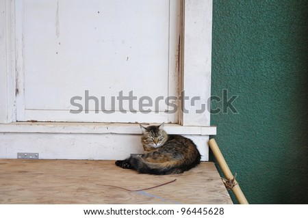Relax Cat - stock photo