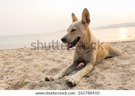 relax dog - stock photo
