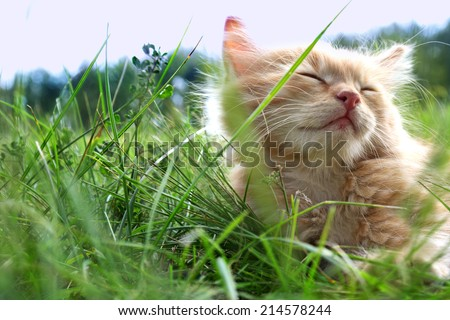 relax kitten on green grass - stock photo