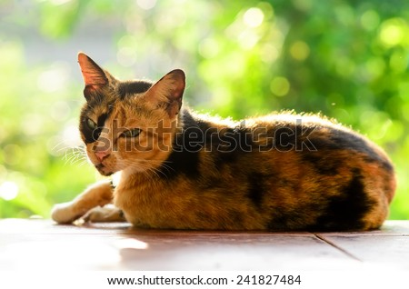 Relaxed Calico Cat  - stock photo