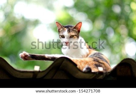 Relaxed Calico Cat On The Roof - stock photo