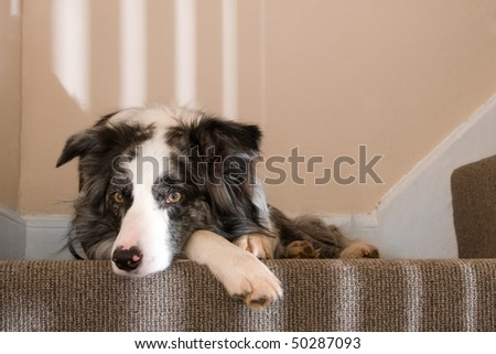 Relaxed dog on the stairs - stock photo