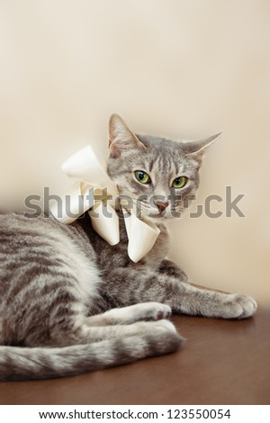 Relaxed smoky cat with white bow sitting