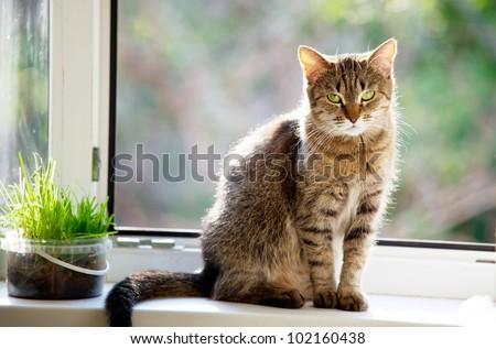 Relaxing cat - stock photo