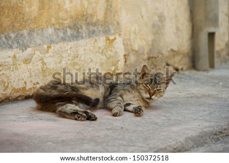 Relaxing cat, sleepy cat in the street on sunny day, sleeping kitten, street cat