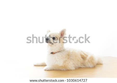 Relaxing dog image