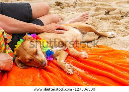 Relaxing elderly man with dog laying at the beach - stock photo