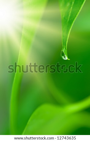 Relaxing environment with falling waterdrop on green leaf and sunshine