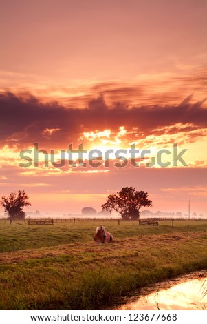 relaxing horse on Dutch pasture at colorful sunrise - stock photo