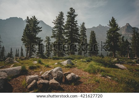 Relic cedars in the mountains. Forest edge among rocks. Summer photo. Nature Park Ergaki. Siberia. Russia - stock photo