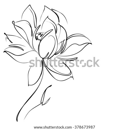 Religion, symbol, lotus, water lily, lily,  Drawing graphics with floral pattern for design. Floral flower natural design. Graphic, sketch drawing. lily