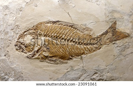 reliquiae fish printed on stone - stock photo