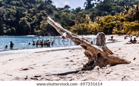Remains of a Tree on the Beach | Manuel Antonio National Park, Puntarenas, Costa Rica