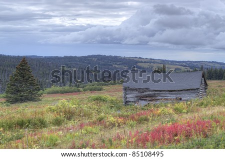 Remains of an old Alaskan homesteaders cabin in fall with red fireweed and building storm clouds.